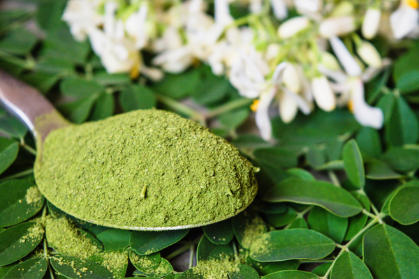 why-you-should-include-moringa-in-your-diet