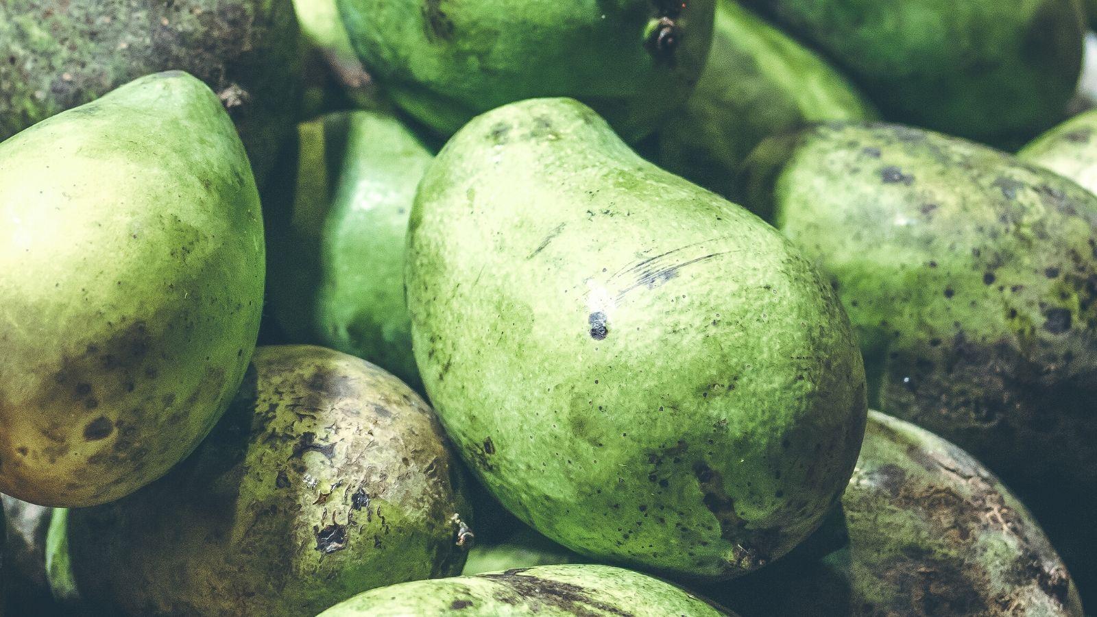 go-the-raw-mango-way