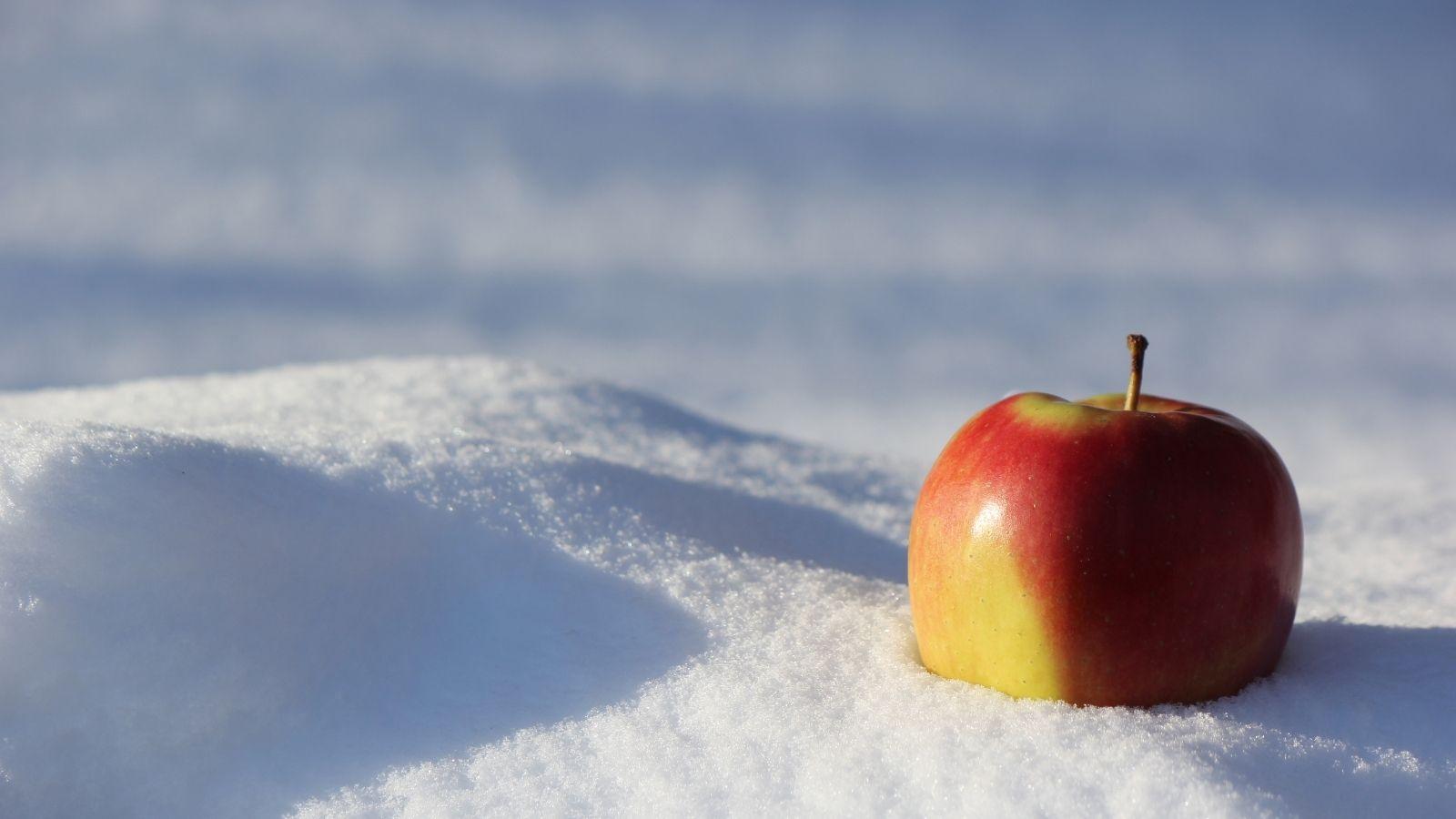 winter food recipes